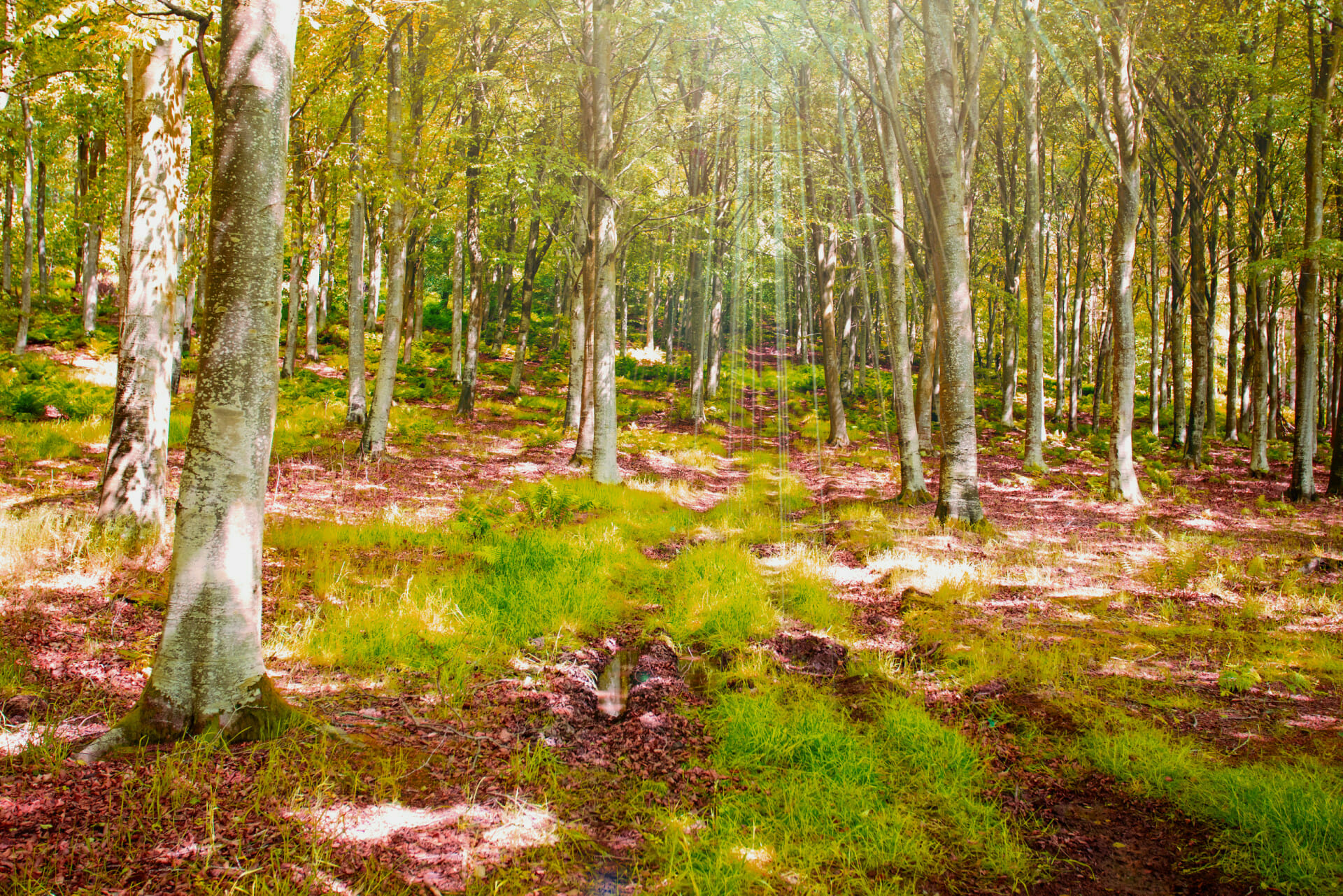 Sunny forest glade with sunrays