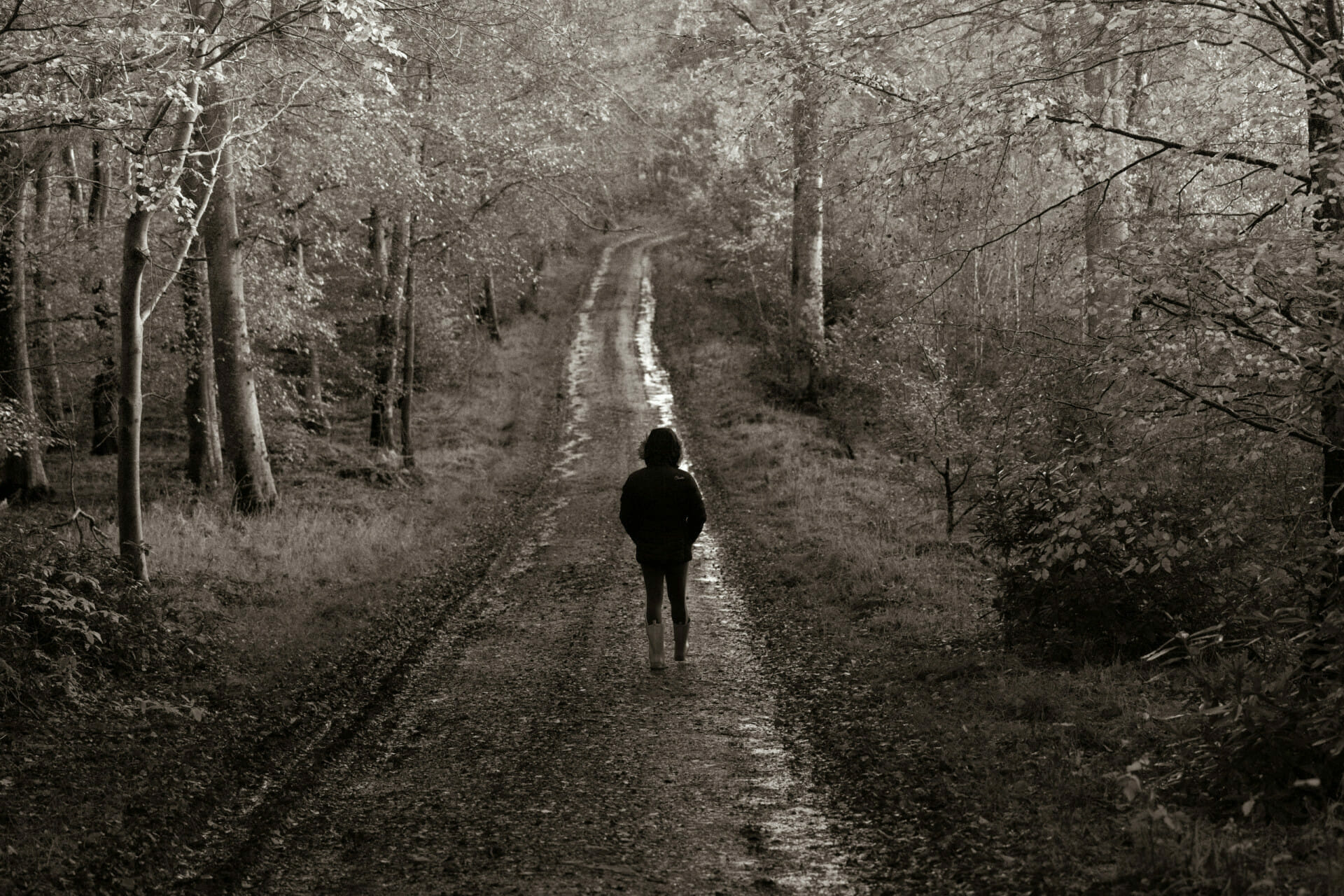 Person walking alone on a forest track.